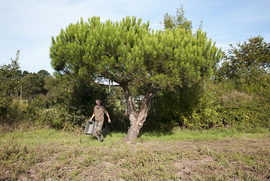 http://www.francoistaverne.com/files/gimgs/86_l1009004.jpg